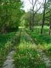 A Trail of Dandelions (jHc__johart) Tags: dandelion trail path kansas