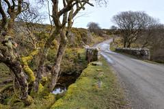 Dartmoor country lane near Hexworthy (Baz Richardson (back on 26 May)) Tags: dartmoor saddlebridge countryroadssouthdartmoor trees countrylanes streams devon