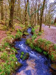 Golitha Falls, River Fowey, Cornwall {Explored} (photphobia) Tags: fowey liskeard cornwall uk oldwivestale outdoor outside river riverfowey water bluesky trees green waterfalls woods forestfloor