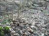 160 - AIGLE Wellworn Wellies filled with mud ( Rubberboots Gummistiefel Laarzen (HeveaFan) Tags: rubberboots rubberlaazen 在泥里的靴子橡胶 kaplaarzen ゴム長靴 gummistiefel 威灵顿长靴 stiefel stivali stövlar ブーツ dunlop hevea aigle ripped wornout rainboots regenlaarzen wellies bottes wellworn caoutchouc galoshes wreckled trashed regenstiefel waterlaarzen soles tuinlaarzen loch leaky damaged trouée undicht versleten laarzen boots wellington kaput mud boue fertig riss gomma trou abgelatscht kaputt lek gumboots bottas vredesteinlaarzen vredesteinwellies vredesteinstiefel