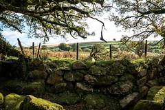 Stone Wall along Joey's LaneNK2_1332 (Jean Fry) Tags: dartmoor dartmoornationalpark devon englanduk moorland moss nationalparks tracks trees westcountry rocks joeys joeyslane stonewalls mossywalls mossyrocks