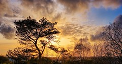 Evening light, Norway (Vest der ute) Tags: norway rogaland haugesund xt2 tree trees clouds sky houses sea fav25 fav200