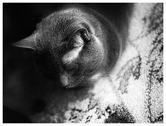 Sleepy (JourneysEnd1750) Tags: kodak d76 film analog bergger pancro400 ricoh 35mmfilm kr10super berggerpancro400