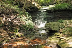 Worlds End SP (25) (Framemaker 2014) Tags: worlds end state park sullivan county forksville pennsylvania endless mountains united states america