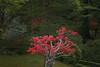 Furumine Shrine 4 (J_Fish) Tags: japan tochigi garden azalea pink tree