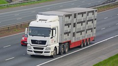 HF60 EHE (panmanstan) Tags: man tgx wagon truck lorry commercial livestock freight transport haulage vehicle a1m fairburn yorkshire