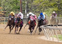 2018 Pimlico Race track (53) (maskirovka77) Tags: pimlico dirt mare race racehorse threeyearold turf yearling