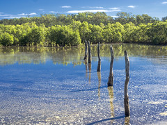 Deepwater Bend Mangroves (5) (bidkev1 and son (see profile)) Tags: beach sun sea sand tropical australia leisure surf swim water ocean sunbake sunbathe landscapephotography waterscape skyscape seascape beachscape forest rainforest mountain sky canon sunset sunrise hiking tourism touristdestination scenery