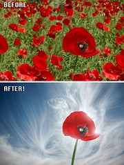 Before After - Flower - Ben Heine Photography (Ben Heine) Tags: beforeafter benheinephotography photography nature landscape before after photoediting editing retouching photoretouching objectremoval colorcorrection photocorrection composition restoration photorestoration masking clippingpath clipping mattepainting retouche retouchephoto photographie foto fotografie flower red beauty