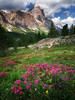 Summer in the Dolomites (Dreamy Pixel) Tags: alpine alps amazing background beautiful beauty blue di dolomite dolomites environment europe extreme flowers fresh grass green high hiker hiking holiday italy landmark landscape male man meadow mountain mountains nature outdoor panorama path peak people pine pretty rock scenery scenic sky sport spring summer tourism travel trekking view wallpaper white