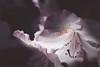 Discretion (Aby Images) Tags: fleurs flowers arbuste bush canon eos 100d garden britanny jardin