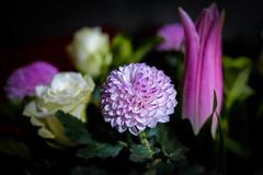 Bouquet (Claude Downunder) Tags: flower flowers bouquet