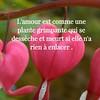 Photo (proverbecitationweb) Tags: citation proverbe quote motivation inspiration