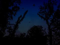 21.05.2018 at late night (FotoTrenz NRW) Tags: nightshot darkness birds sky trees blue night fantasy darkart