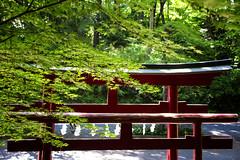 Spring Leaves & A Shinto Gate, Chichibu (El-Branden Brazil) Tags: japan japanese shinto shintoism asia asian spring trees