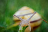Bon appetit! (Karsten Gieselmann) Tags: 60mmf28 braun dof em5markii grün mzuiko microfourthirds olympus schnecke schärfentiefe textur weichtiere wirbellose brown green kgiesel m43 mft texture