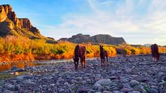 One Of The Wild Ones (vgphotoz) Tags: vgphotoz usa wildhorses arizona river ngc marculescueugendreamoflightsportal