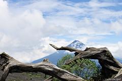 Troncos y el volcán de Agua (Guido De León) Tags: guatemala guatemalaimpresionante guatedepostal visitguatemala volcandeagua