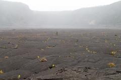 Kilauea Iki (mfeingol) Tags: kilaueaiki hawaiivolcanoesnationalpark hawaii bigisland volcano pāhoa unitedstates us
