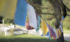 _DSC1933 (toivo_xiv) Tags: spring tibet tibetan kyiv ukraine sony sonyalpha