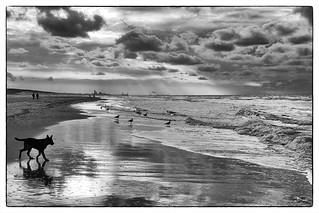 Newton on the beach