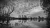 Life and death (Karsten Gieselmann) Tags: 714mmf28 baum bavaria bäume em5markii frühling germany hdr jahreszeiten kronbertsweiher landschaft mzuiko microfourthirds monochrome natur olympus pflanzen schwarz schwarzweis seeteichweiher sonnenaufgang weis bw black blackwhite kgiesel lake landscape m43 mft mono nature pond sw seasons spring sunrise tree trees white teublitz bayern deutschland sat