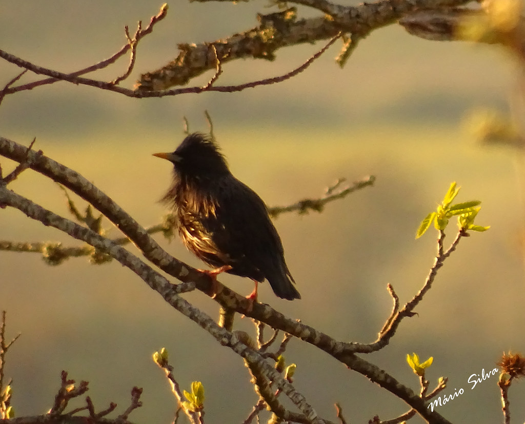 Águas Frias (Chaves) - ... ave em tenros ramos ...
