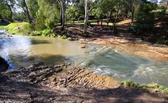 Coburg North-dog in  MERRI EDGARS WETLAND 2018 020 (Graeme Butler) Tags: wetlands water trees landscape gardens bushland victoria australia