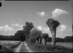 ica140518-1 (salparadise666) Tags: nils volkmer large format view field camera analogue film fomapan caffenol black white monochrome landscape willows hannover region niedersachsen germany north german plains lowlands ica universal 9x12 pololyt
