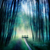 Bridge Of Hope.... (Janet_Broughton) Tags: burnside35 lensbaby forest whimsical trees