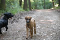 Bibi0516-2009 (adam.leaf) Tags: canon 6d 24105l leafling forest dog