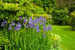 Bell House Garden.. (Adam Swaine) Tags: gardens dulwich england london flora flowers britain naturelovers nature seasons spring uk fourseasons petals purplegreen bellhouse canon