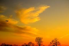 One sky wonder. (Photolove2017) Tags: nikondx nature colors clouds tiaphoto d3100 sky silhouettes sunset bushes photolove2018 park bird landscape light sun trees
