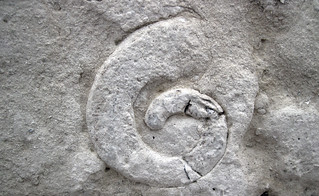 Fossiliferous limestone (Columbus Limestone, Middle Devonian; Sullivant Quarry, Columbus, Ohio, USA) 42