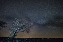 Old Tree and Milky Way (Star Watcher) Tags: samyang 10mm f28 canon 80d night landscape tree milky way