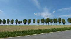 Trees (joeke pieters) Tags: 1390697 panasonicdmcfz150 gerleve coesfeld coesfelderberg noordrijnwestfalen westfalen northrhinewestphalia nordrheinwestfalen münsterland duitsland deutschland germany bomen trees landschap landscape landschaft paysage