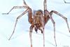 Spider Macro (Allan Jones Photographer) Tags: spider spidermacro arachnid eightlegs eighteyes hairy macrox3 nature allanjonesphotographer canon5div canonmpe65mmf2815xmacro