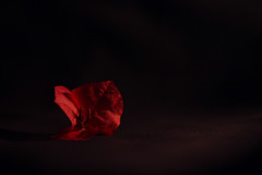 Red bouganville (VinCenzo_Russo) Tags: bouganville flower fiore red black primavera spring low light beautiful canon 50mm