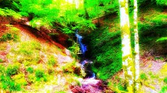 Bosque saturado (jumaro41) Tags: árbol bosque deporte ejercicio eugi navarra green hojas life monte montaña mountain naturaleza natural nature paseo rio ramas sendero senderismo troncos tree verde vida madera arroyo hierba río carretera senda jardín suelo parque
