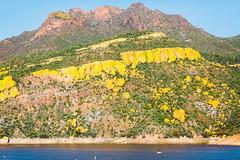 Color Balance (Thomas Hawk) Tags: america arizona bartlettlake cavecreek tontonationalforest usa unitedstates unitedstatesofamerica yellowcliffs cacti cactus desert rioverde us fav10 fav25 fav50
