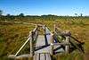 Walking path in bog, Latvia (Mivr) Tags: jurmala bog nature sunny summer grass path wooden space latvia kemeri national park