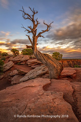 Tree (RondaKimbrow) Tags: coloradonationalmonument colorado grandjunction tree dead view landscape clouds morning sunrise glow beautiful sky unitedstates homedecor officedecor fineart photography image scenic vacation travel mytree rondakimbrowphotography