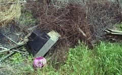 (Rachel Fantone) Tags: 2017 film kodak cracker box animal farm garbage tv brush pumpkin