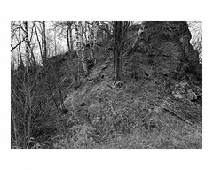 Rock outcropping knoll with birch trees, near Lake Superior (Richard C. Johnson: AKA fishwrapcomix) Tags: leicaq leitz28mmsummiluxf17 reddot wetzlar blackandwhite bw monochrome landscape trees shrubs outdoorrecreation rain bedrock cloudy birch spring tree harbor lakesuperior greatlakes grandmarais minnesota icamesofarforbeauty sictransitgloriamundi