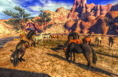 Wild horses (Milla DelRay) Tags: horse horses wild west mexico sonora rock rocks desert tree trees canyon river rivers arch arches sl secondlife nature sky field fields ruin ruins shadow shadows
