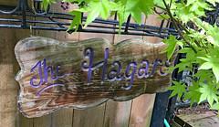 H Is For Hanging Sign (BKHagar *Kim*) Tags: bkhagar h letter letterh sign hanging hagar fence wood wooden maple tree outside outdoors challenge julesphotochallengegroup