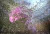 """""""Flieder"""" (Günter Nietert) Tags: lilac flieder rot frühling mehrfachbelichtung fineart"""