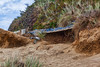 Stopping erosion (Barb Henry) Tags: wild mountain wall rocks nature greens plants oregoncoast pacificnw seal rock