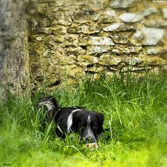 """ Non! Personnes d'entres vous aura ma balle "" (Celti-KL) Tags: animal animaux animaldecompagnie animauxdecompagnie"