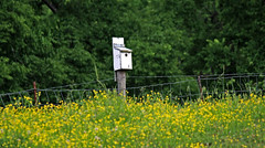 ~ The Blue Bird Box .... (~ Cindy~) Tags: bluebirdbox wildmustard greenfields greentrees tennessee wirefences springtime